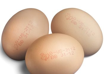 MKD- Eggs 2